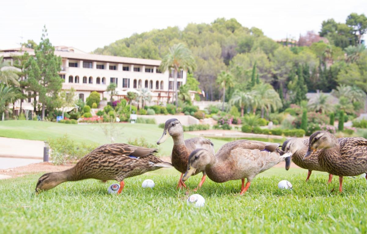 Golf courses can collaborate on conservation of the environment